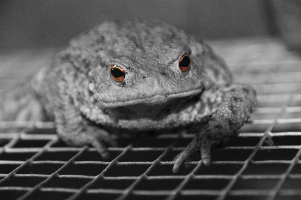 Dirty Frogger