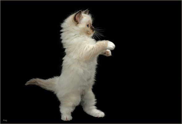 Disco-Cat