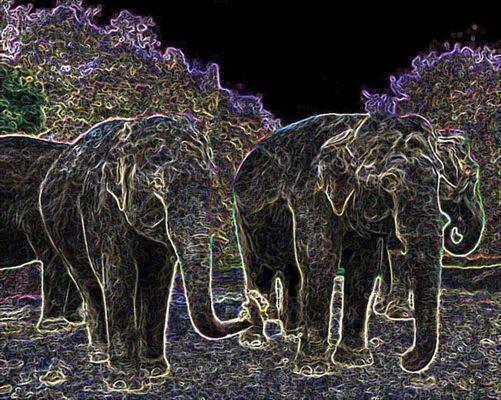 Disco Elefanten