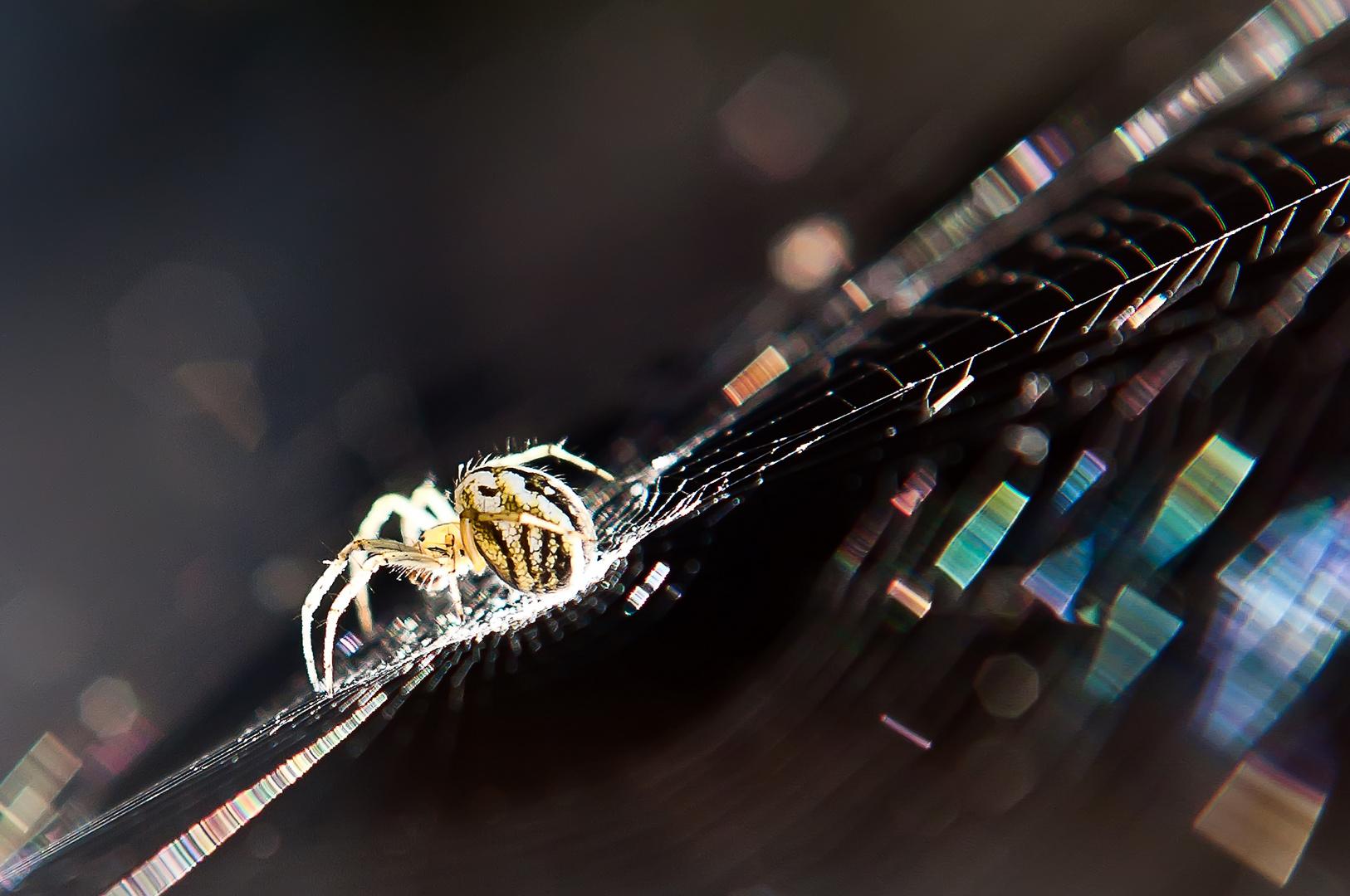 Disco-Spider