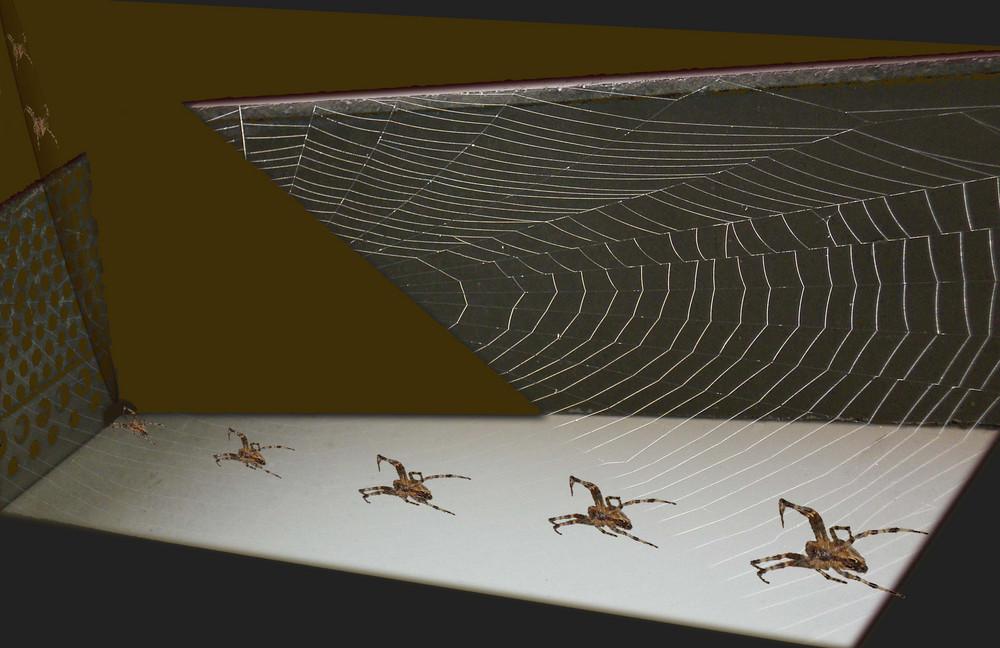Disque dans une toile d'araignée - '7'