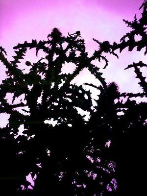Distel in Darknes