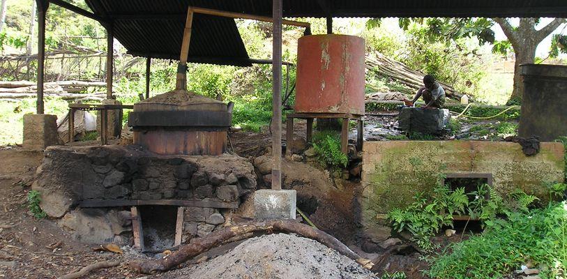 Distilleur d'ylang ylang , Mayotte