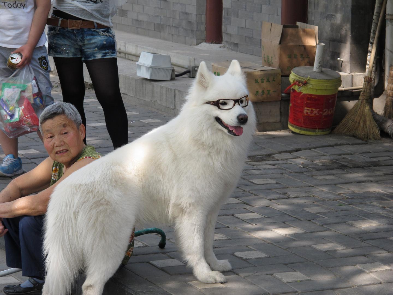 Div. Comic in einem Bild, so lebt es sich in Peking