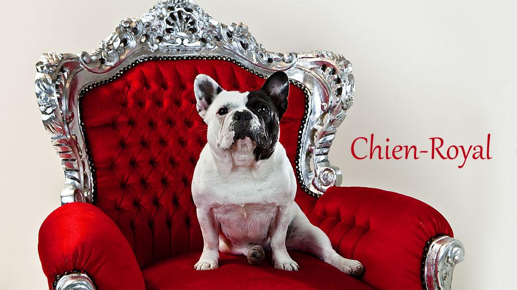 Diva von Chien-Royal