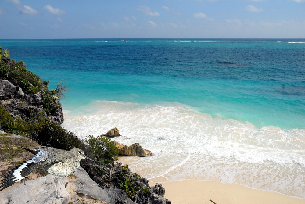divines Caraïbes