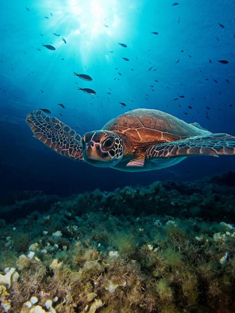Diving dream & memory
