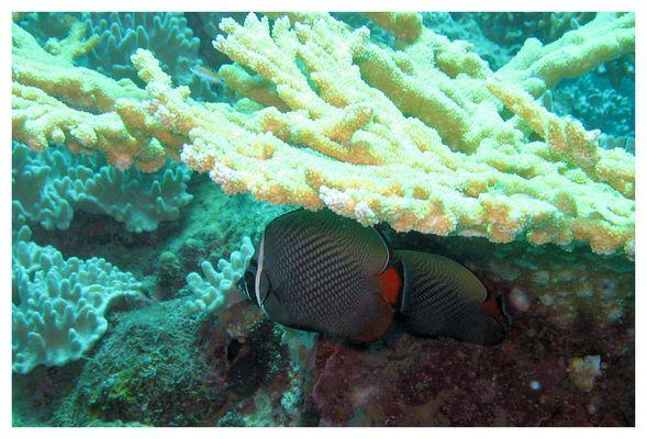 Diving @Racha Yai