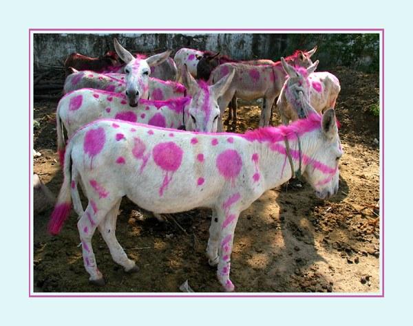 Diwali Esel Balassinore India