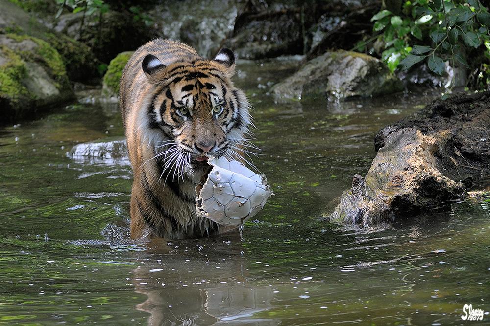 Djhala und sein Ball