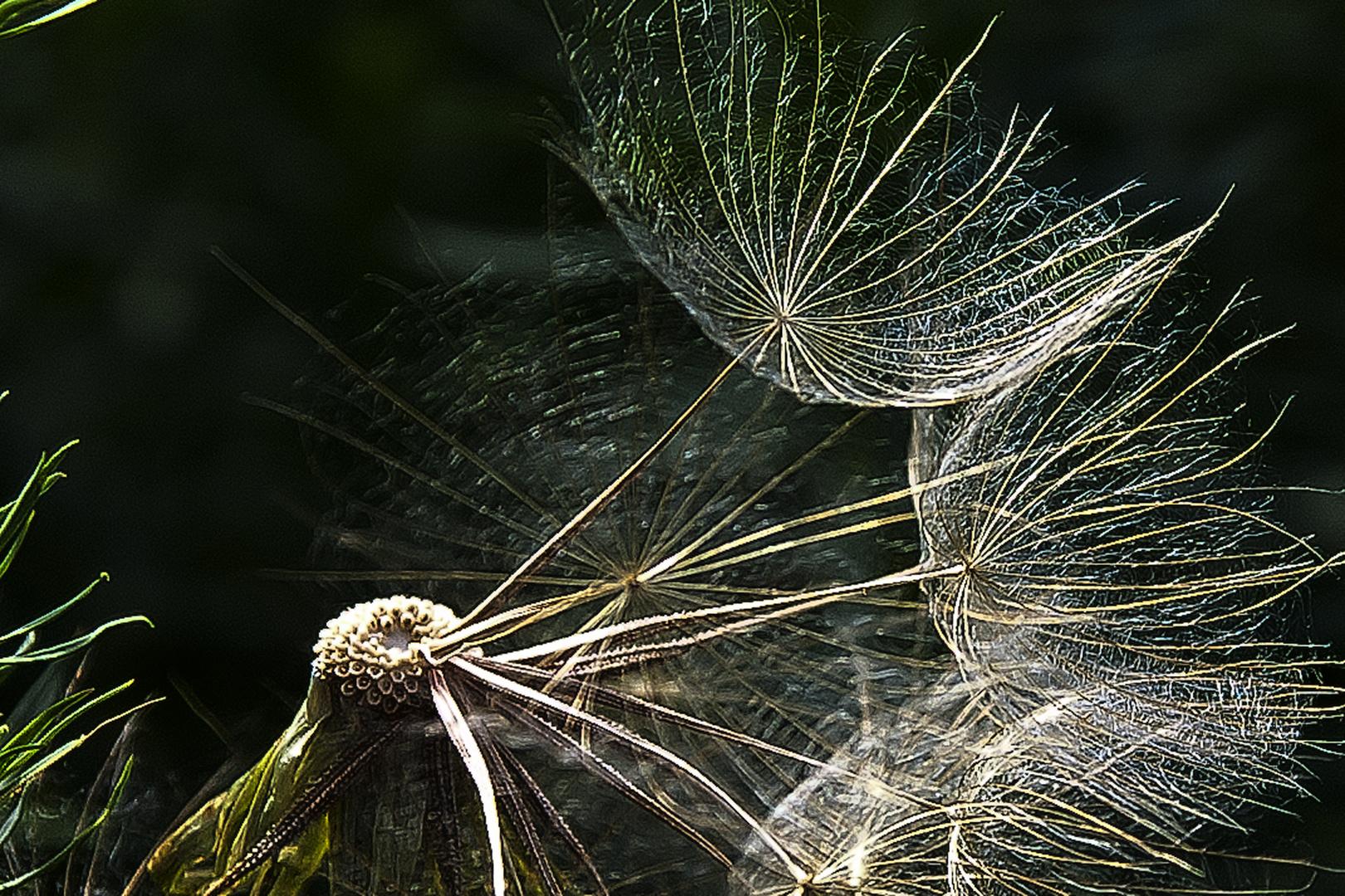 Dmuchawce, latawce wiatr...........