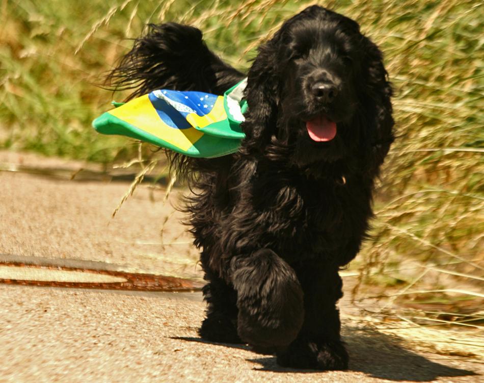 do Brasil WM 2014 ........