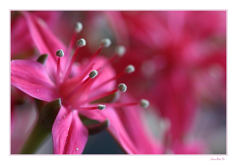 Do you want a little bit pink ? ;-)