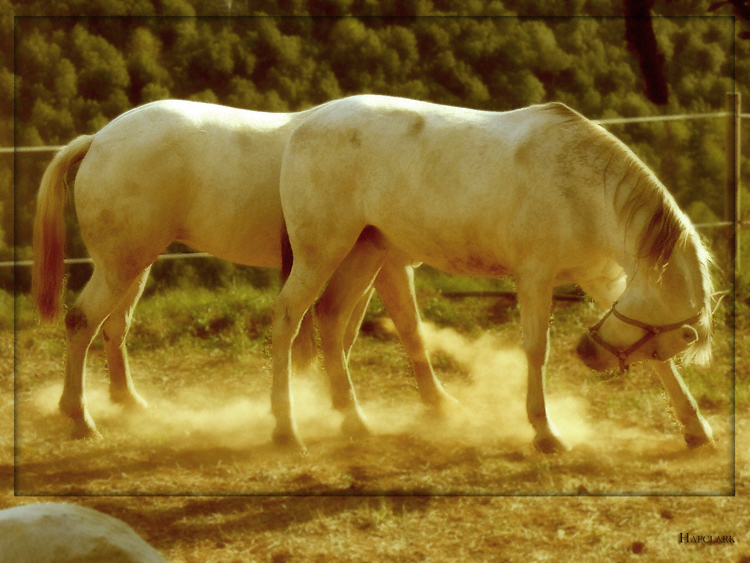 Doble equino