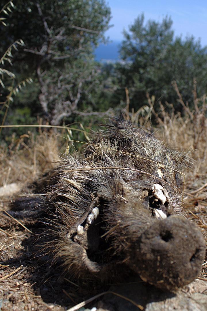 Doch kein Schwein gehabt - Überfahrenes Wildschwein am Straßenrand