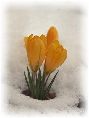 ....doch kein Winter ist so eisig, daß ihn nicht der Frühling bricht.
