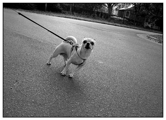 Dog #7