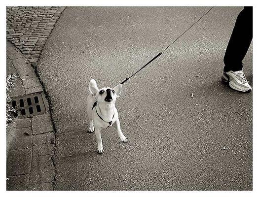 Dog #7 plus Beine