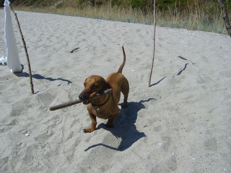 Dog and Shaddow