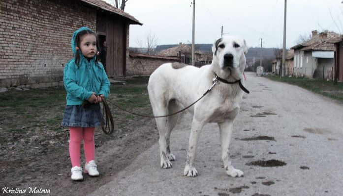 Dog Assistent