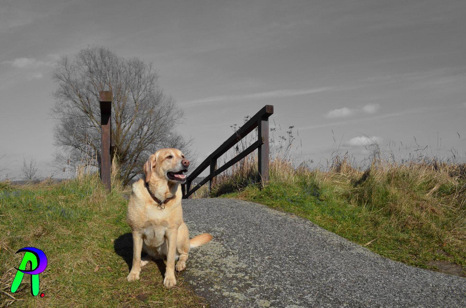 Dog by walk
