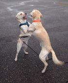 dog Dance ;)