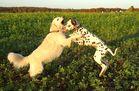 *Dog Dancing*
