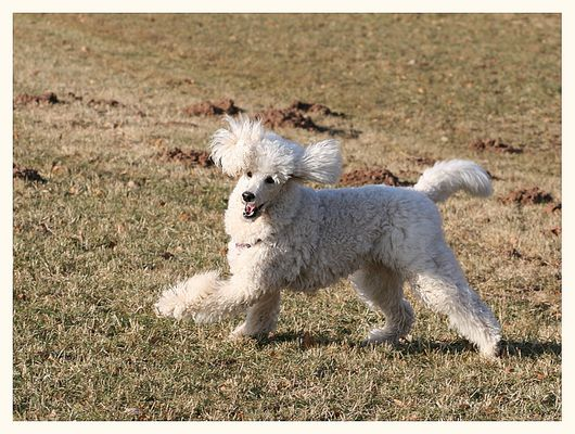 Dog Dancing einmal anders