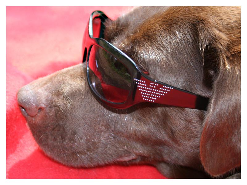 Dog DeLuxe :)