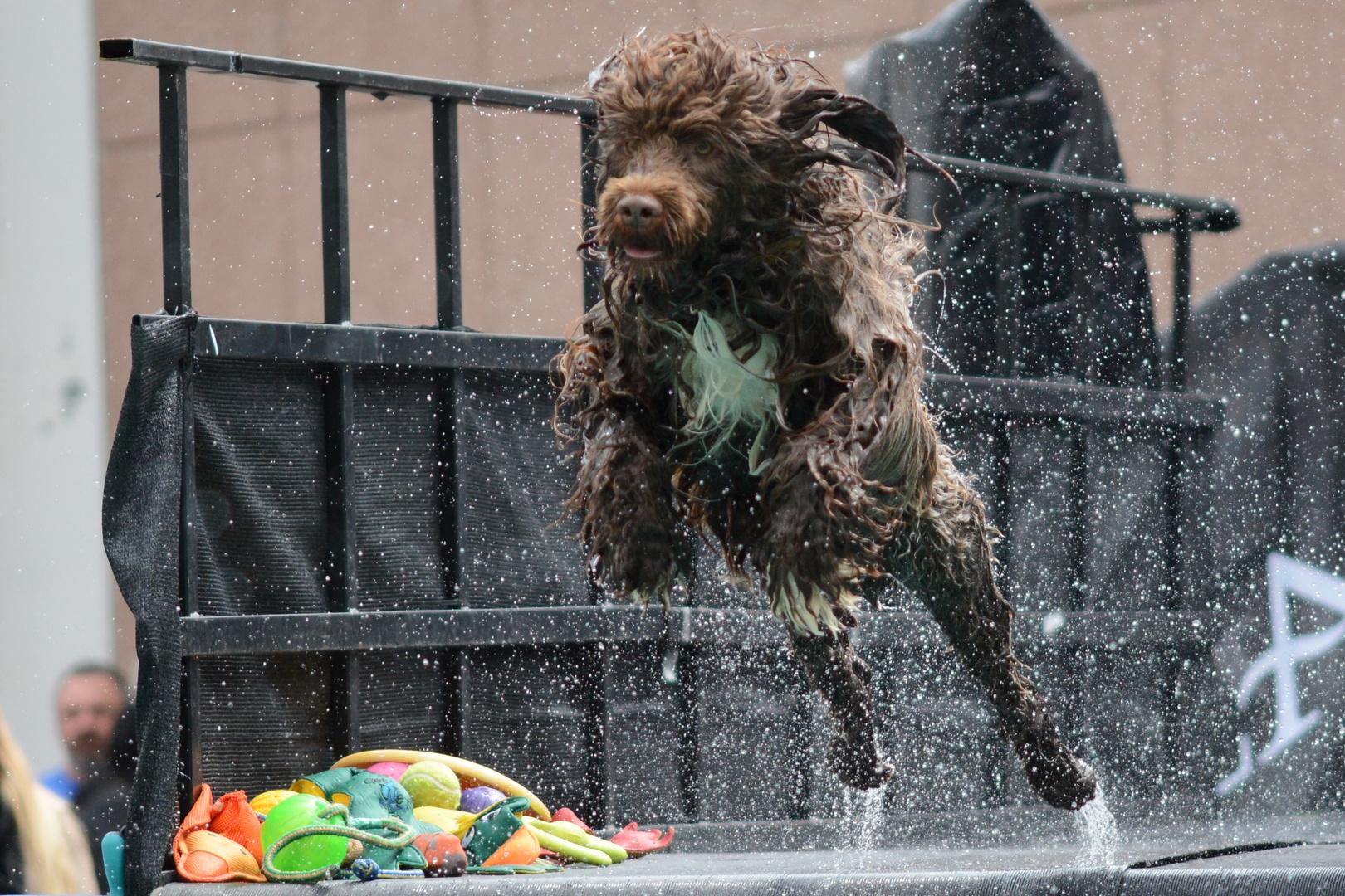 Dog Diving 7