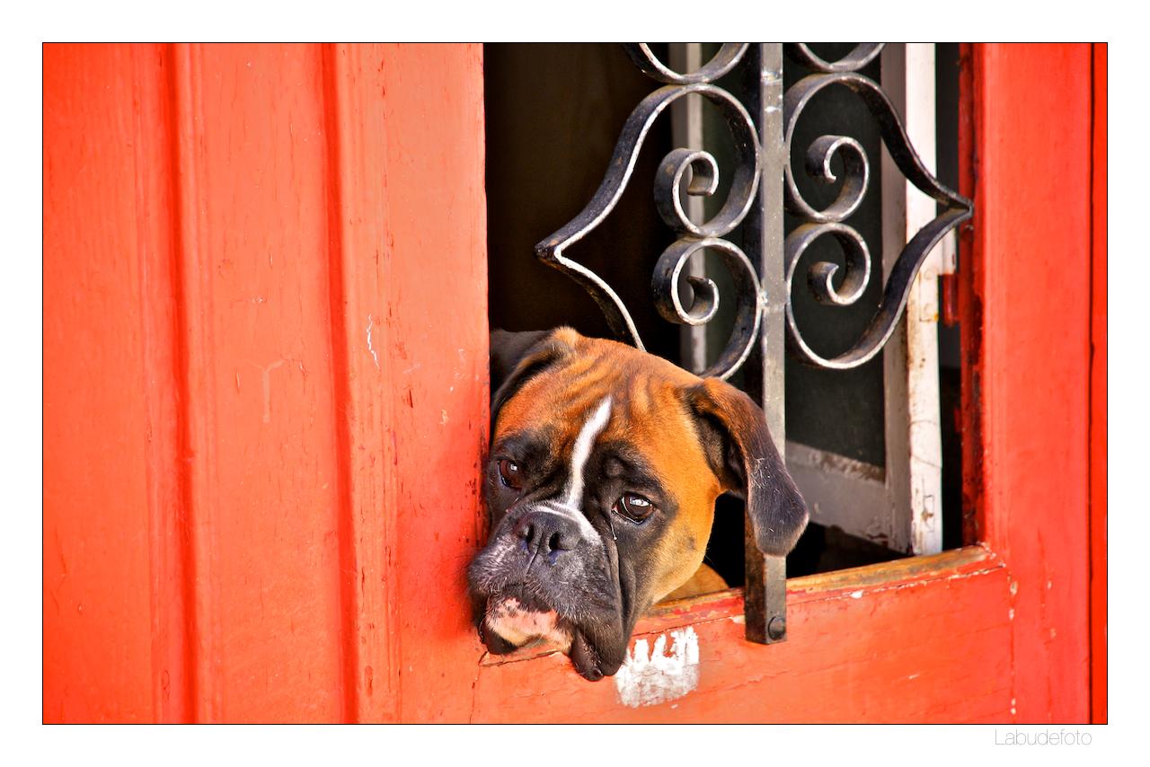 Dog. Door. Castel de Vide.