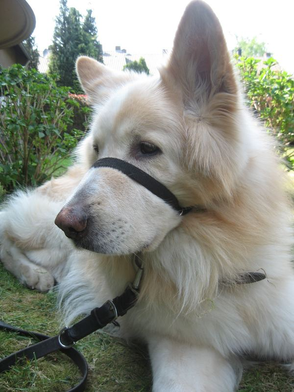Dog @ Garden