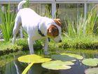 Dog gone fishing