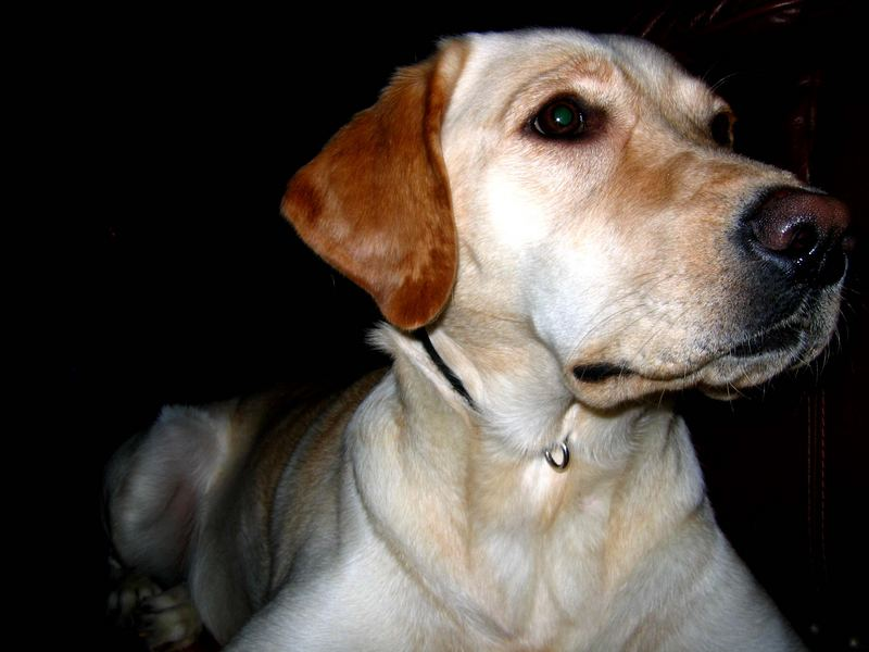 Dog III