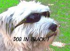 dog in black