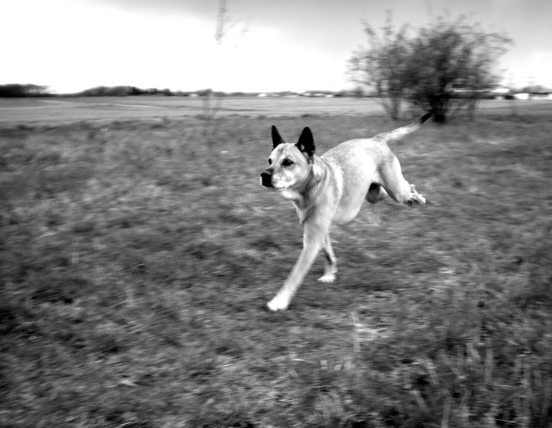 Dog in Motion :)