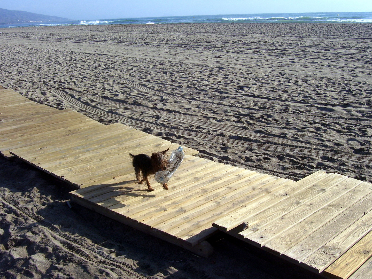 dog on the catwalk