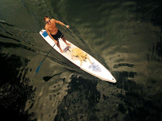 dog paddle an der Alten Donau