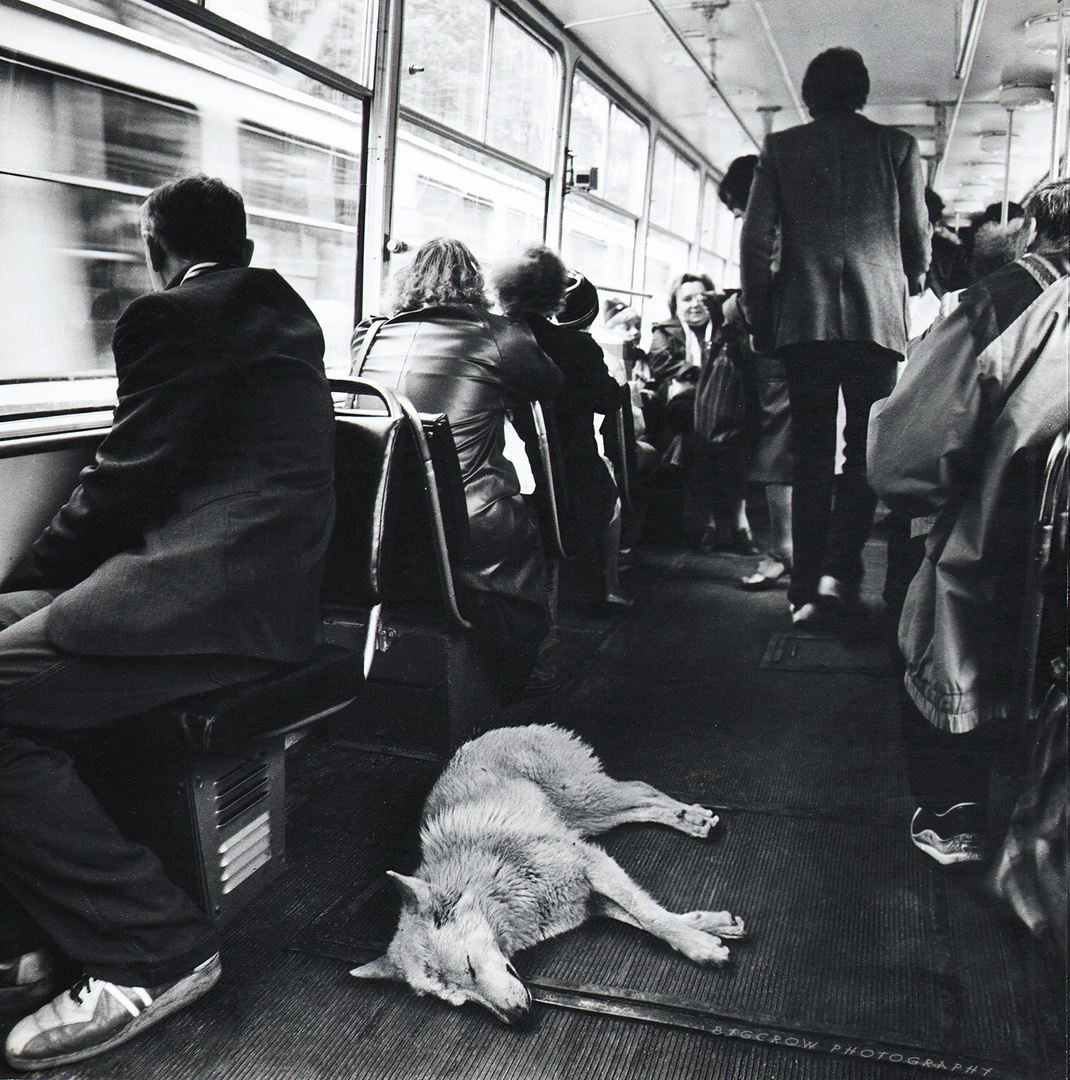 dog & people