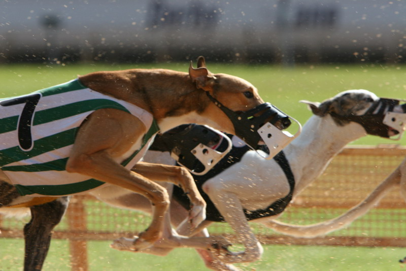 Dog Race - Clearwater_01