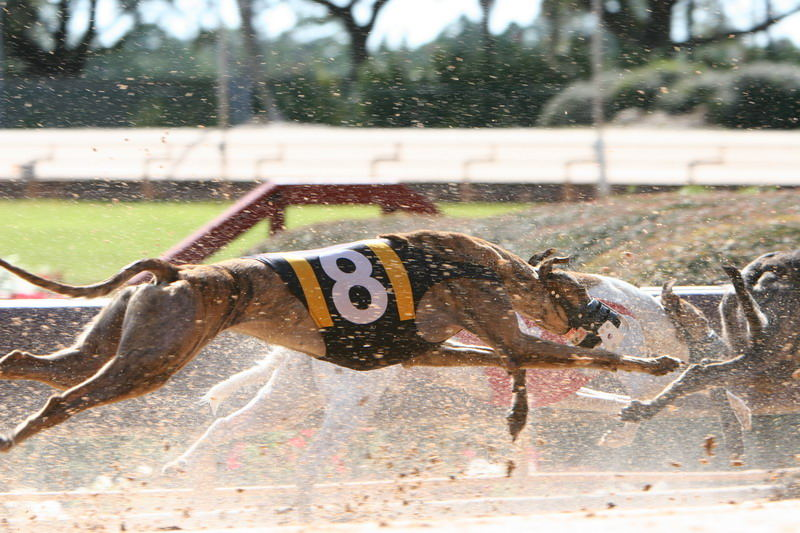 Dog Race - Clearwater_02