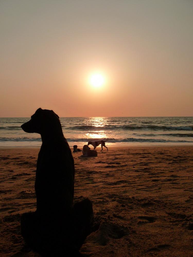 Dog Relaxing 1