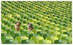 Dog Sit-in II