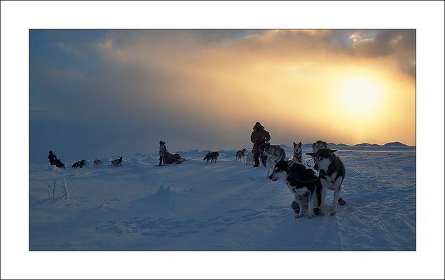 [ dog sled expedition - Yukon ]