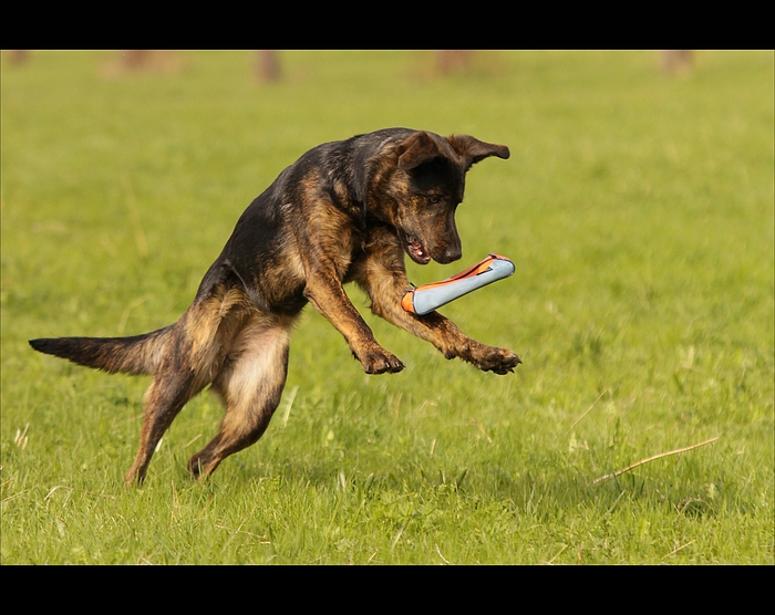 Dogaction