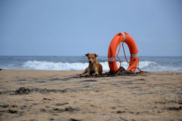 Dogbaywatch