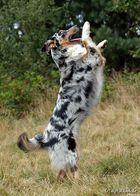 Dogdance ;-)