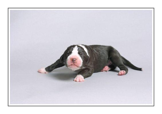 Doggenbaby