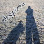 dogpix4u