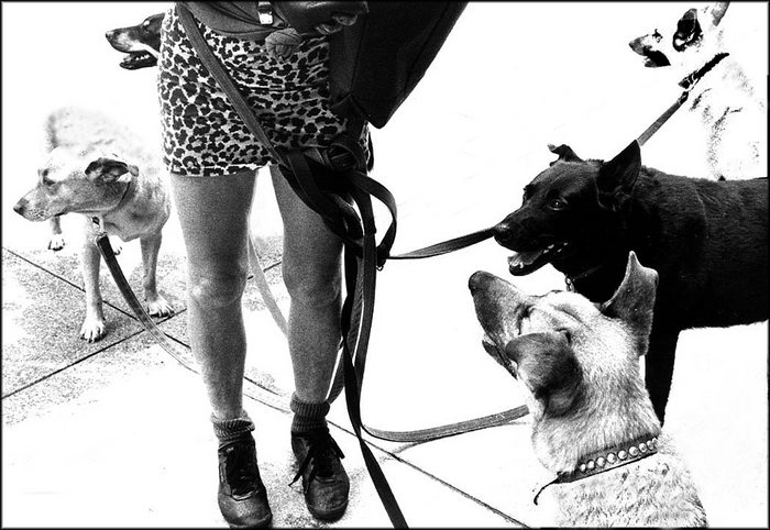 Dogs-Lady